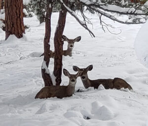 Winter Tour with Tour Estes Park